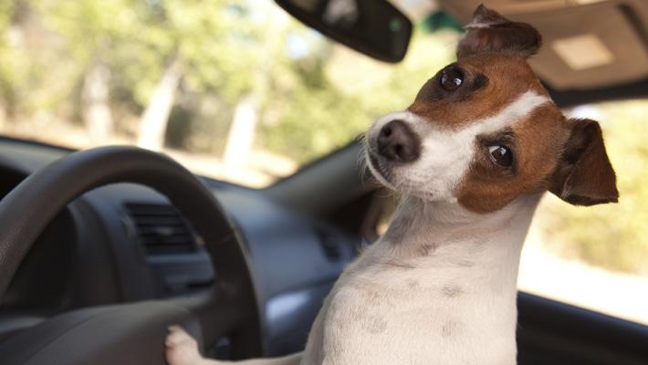 viajes-en-auto-con-mascotas