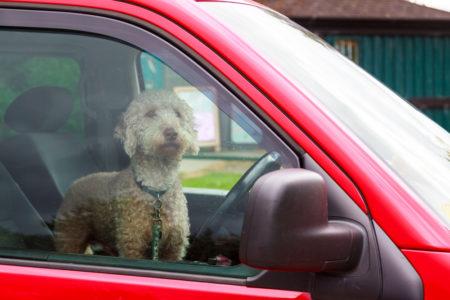 perro en el asiento trasero de un auto corriendo peligro en un carro caliente